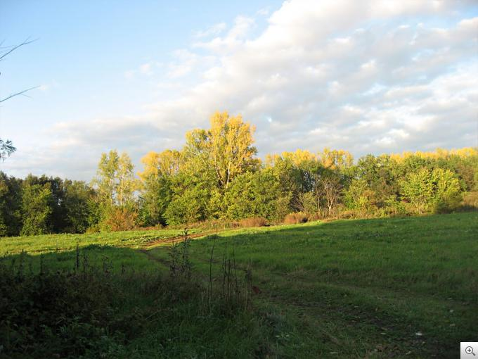 Лес в тени